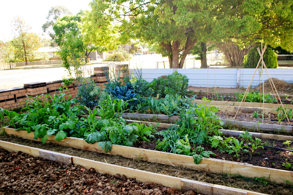 House of Humble Vegetable Patch